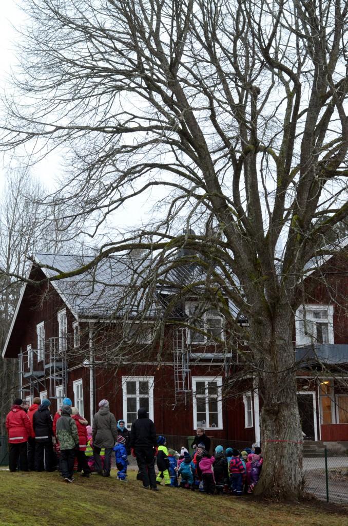 Trädet står alldeles utanför Enebackens förskola och Stenebys Röda skolan